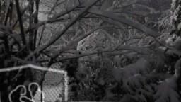 Winter Snow Song - Audrey Assad with Chris Tomlin