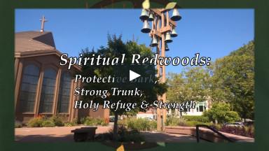 "September 20, 2020 ""Spiritual Redwoods: Protective Bark, Strong Trunk, Holy Refuge & Strength"""
